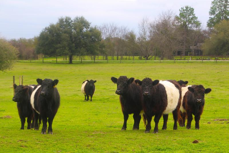Brenham-Washington County Texas, Southern Rose Ranch