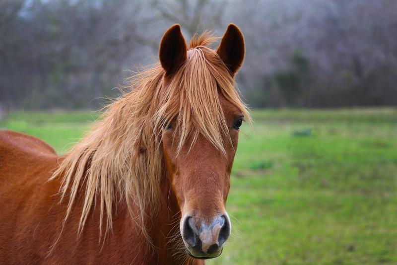 Brenham-Washington County Texas, Horse in Field near Southern Rose Ranch