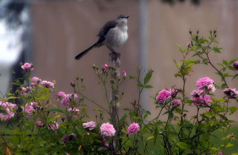 Fredericksburg Texas, Lady Bird Johnson, Nature Center