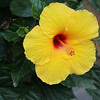 Elkhart Lake Wisconsin, Hibiscus Flower
