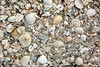 Florida Sanibel Island beach sea shells sand US