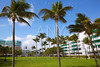 Miami south Beach palm trees park Florida