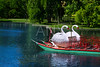 Boston Common public garden Swan boats