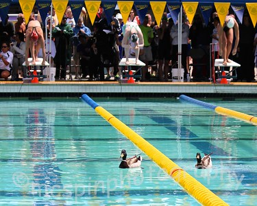 US Masters Swimming Spring National Championships