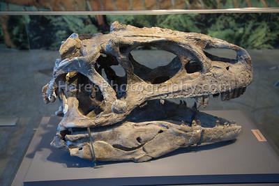 Dinosaur NM-3099
