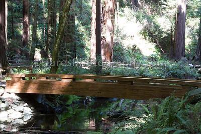 Muir Woods-2356