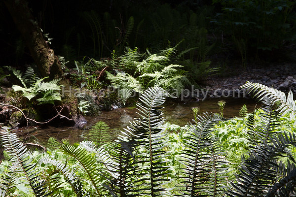 Muir Woods-2460