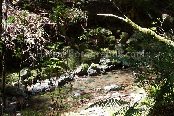 Muir Woods-2391