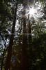 Muir Woods-2436