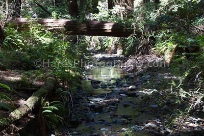 Muir Woods-2418