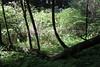 Muir Woods-2344