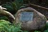 Muir Woods-2395