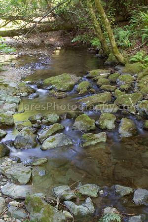 Muir Woods-2465