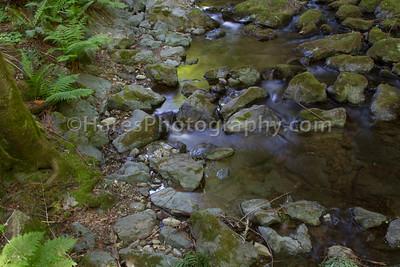 Muir Woods-2469