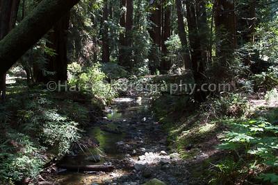 Muir Woods-2423