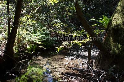 Muir Woods-2409