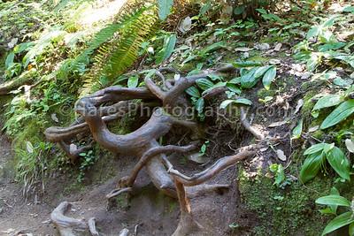 Muir Woods-2364