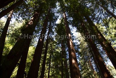 Muir Woods-2379