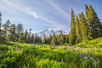HDR Composition. Paradise. Mount Rainier National Park - Washington, USA