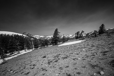 Pacific Crest Trail near Sonora Pass. Stanislaus National Forest, CA, USA