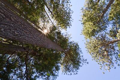 Trees. Road to Mono Lake, CA