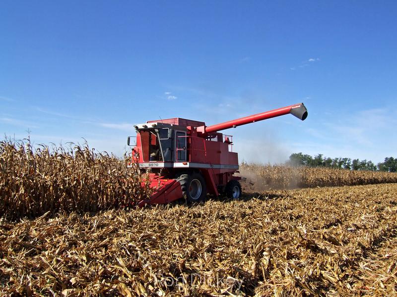 Harvesting Corn in Illinois