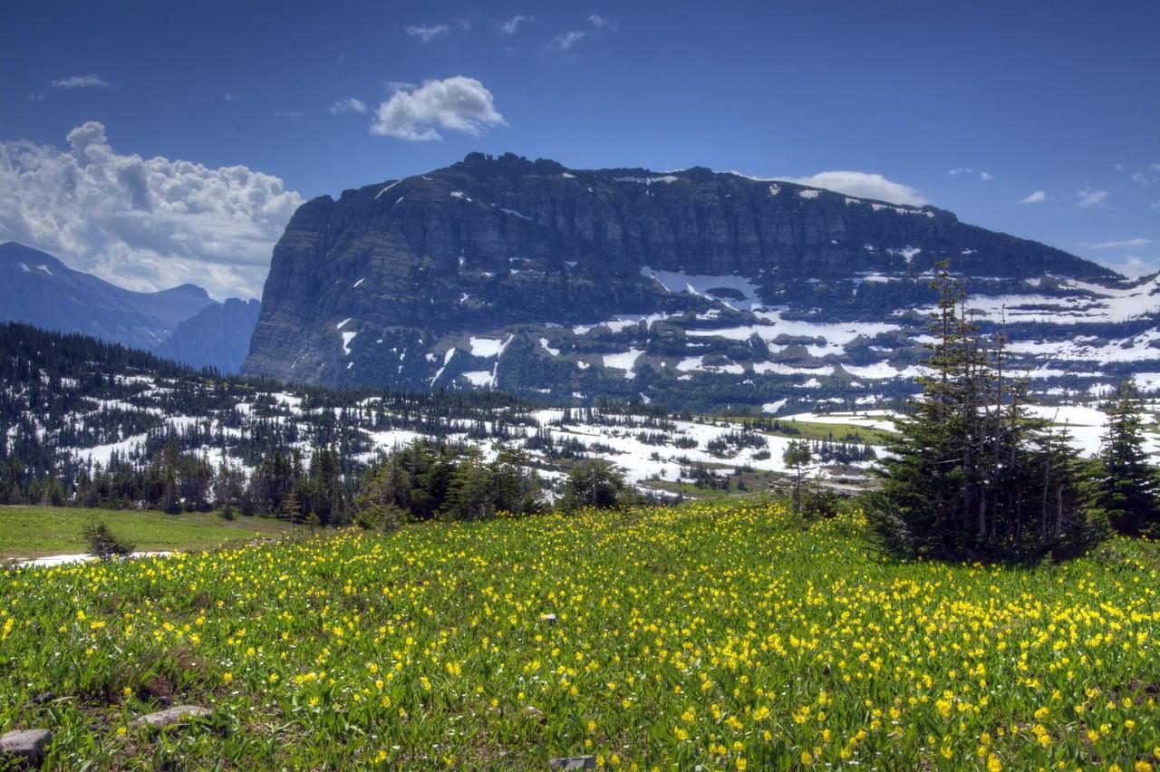 61 - Alpine Meadow