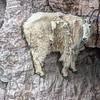 35 - Mountain Goat  - Cliffside, Essex, Montana