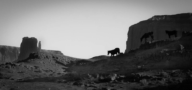 Horses near Elephant Butte