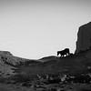 Horses near Elephant Butte