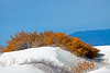 Colorful fall foliage at White Sands NP