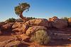 Lone tree at Dead Horse State Park, Utah