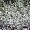 Fall Snowfall