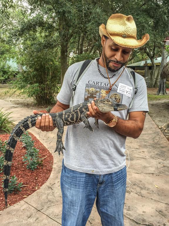 A baby alligator at Billie Swamp Safari on the Big Cypress Seminole Reservation