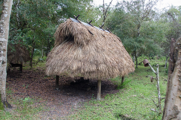 A chickee, native thatched roof hut. At Billie Swamp Safari, Florida
