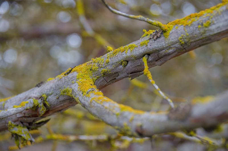 Colorful lichen on the Skillet Handle peninsula near Running Y Ranch, Klamath Falls, Oregon