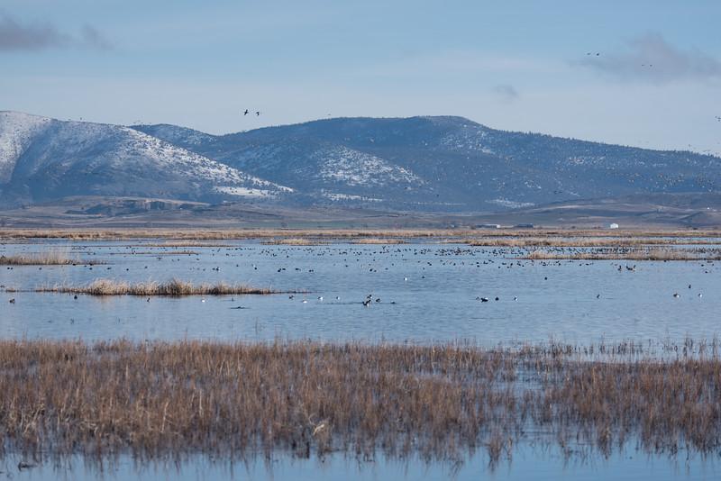 Bird-watching at Lower Klamath Wildlife Refuge
