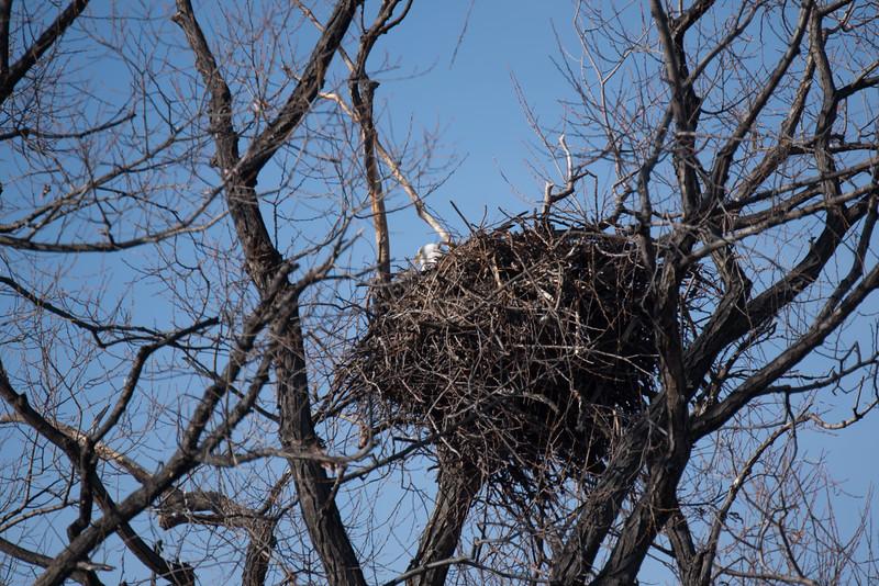 A bald eagle nest at the Lower Klamath National Wildlife Refuge, near Klamath Falls, OR