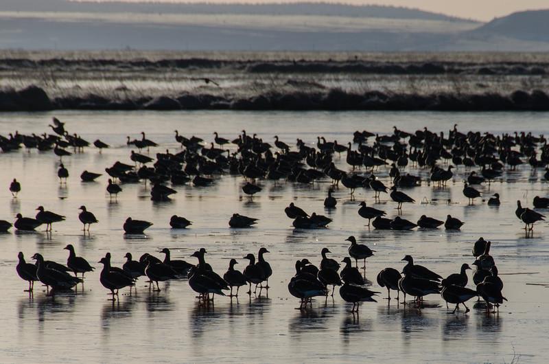 Birding at Lower Klamath National Wildlife Refuge