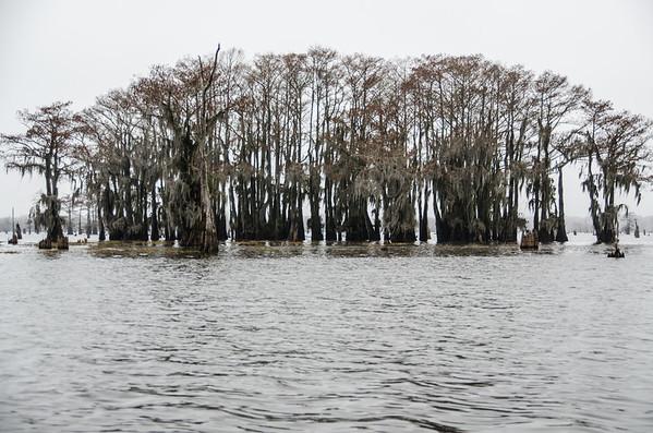 Atchafalaya Basin Swamp tour near Lafayette, LA