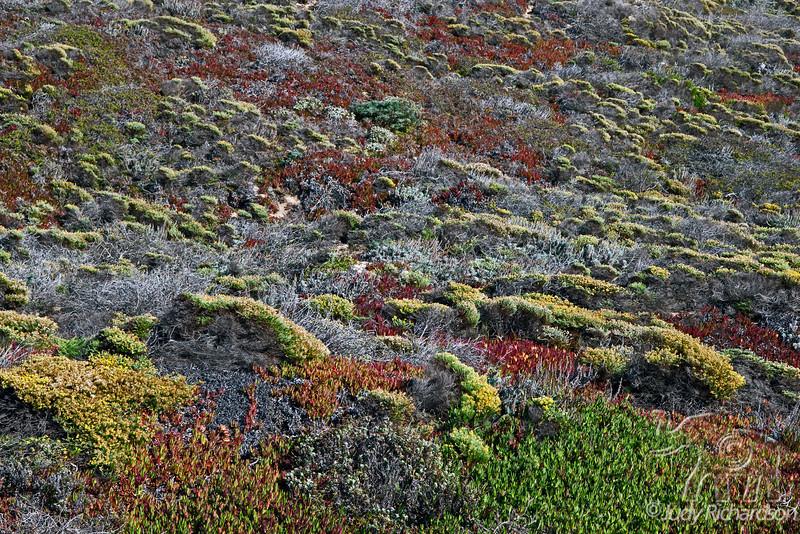 367 - Hillside Colors of Big Sur 6x4-3r 1D_2352