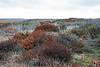 Sandholt Lot Vegetation ~ 10-10-12