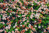 Sandholt Lot Flowers~ 10-10-12