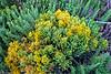 Sandholt Lot Flowers ~ 10-10-12