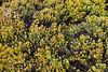 Sandholt Lot Vegetation~ 10-10-12