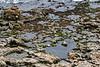 Natural Bridges State Beach Tidal Pools ~ 8, 2015
