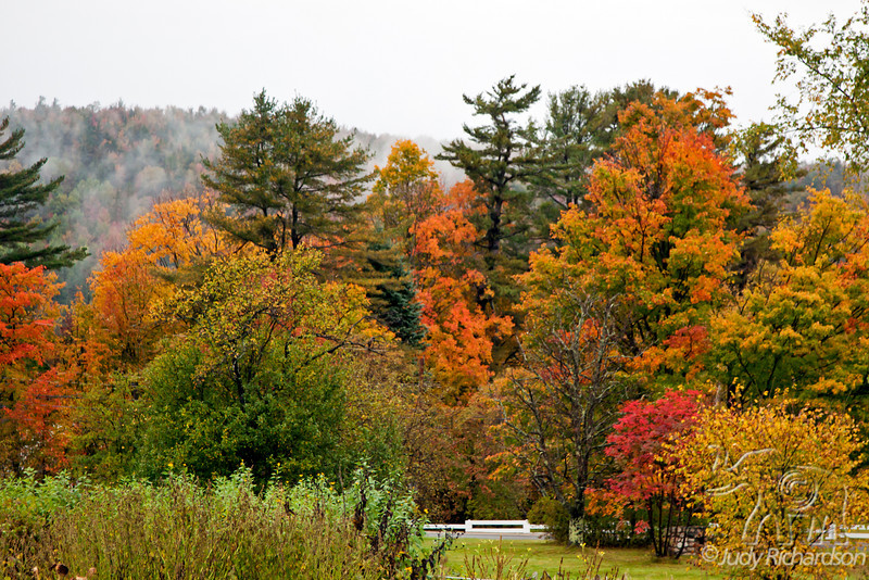 Fall colors in White Mountains during torrential rains