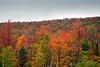 Fall colors in rain, New Hampshire