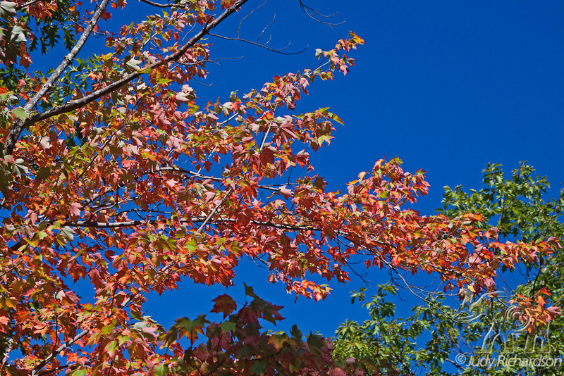 Colorful Fall foliage against brilliant blue skies in White Mountains of New Hampshire