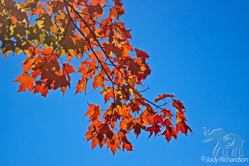 Colorful Fall foliage against a crystal blue sky in the White Mountains of New Hampshire